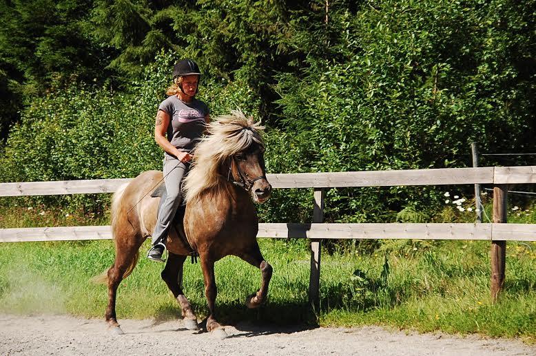 Vinda, en av de islandshästar jag hade på inridning och töltsättning i Norge.