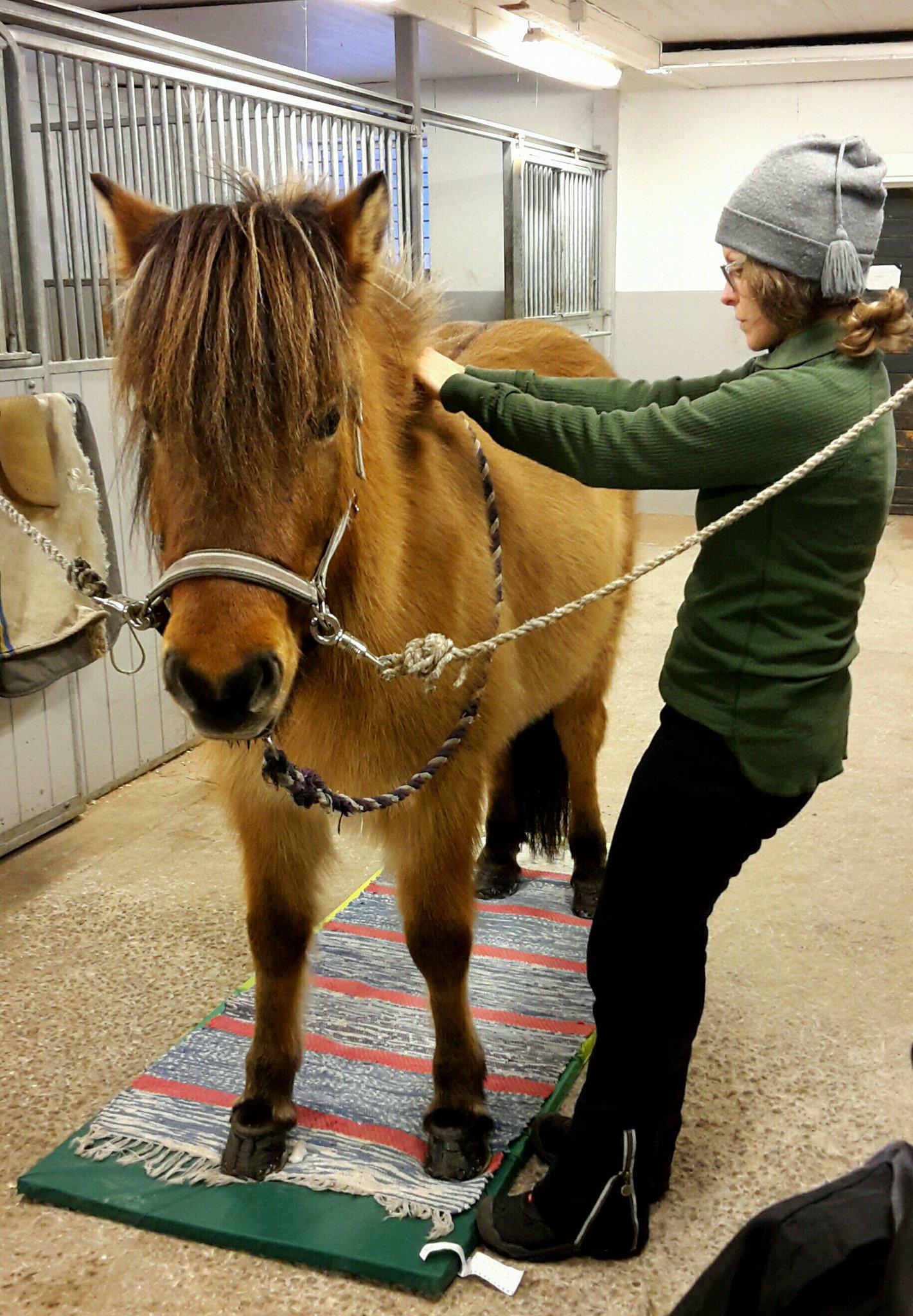 träna hästens hållning