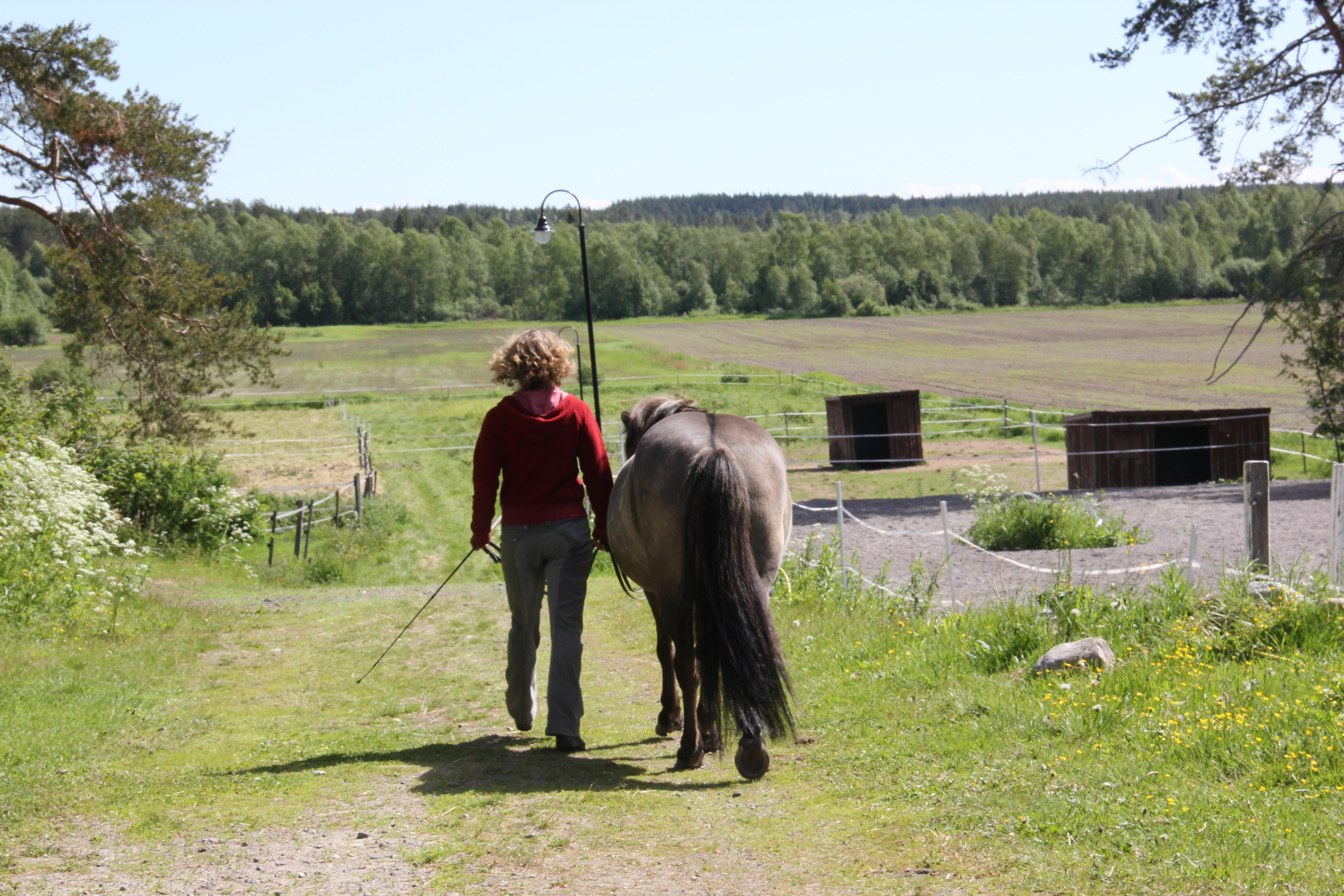 Sofie Grenholm Islandshästar