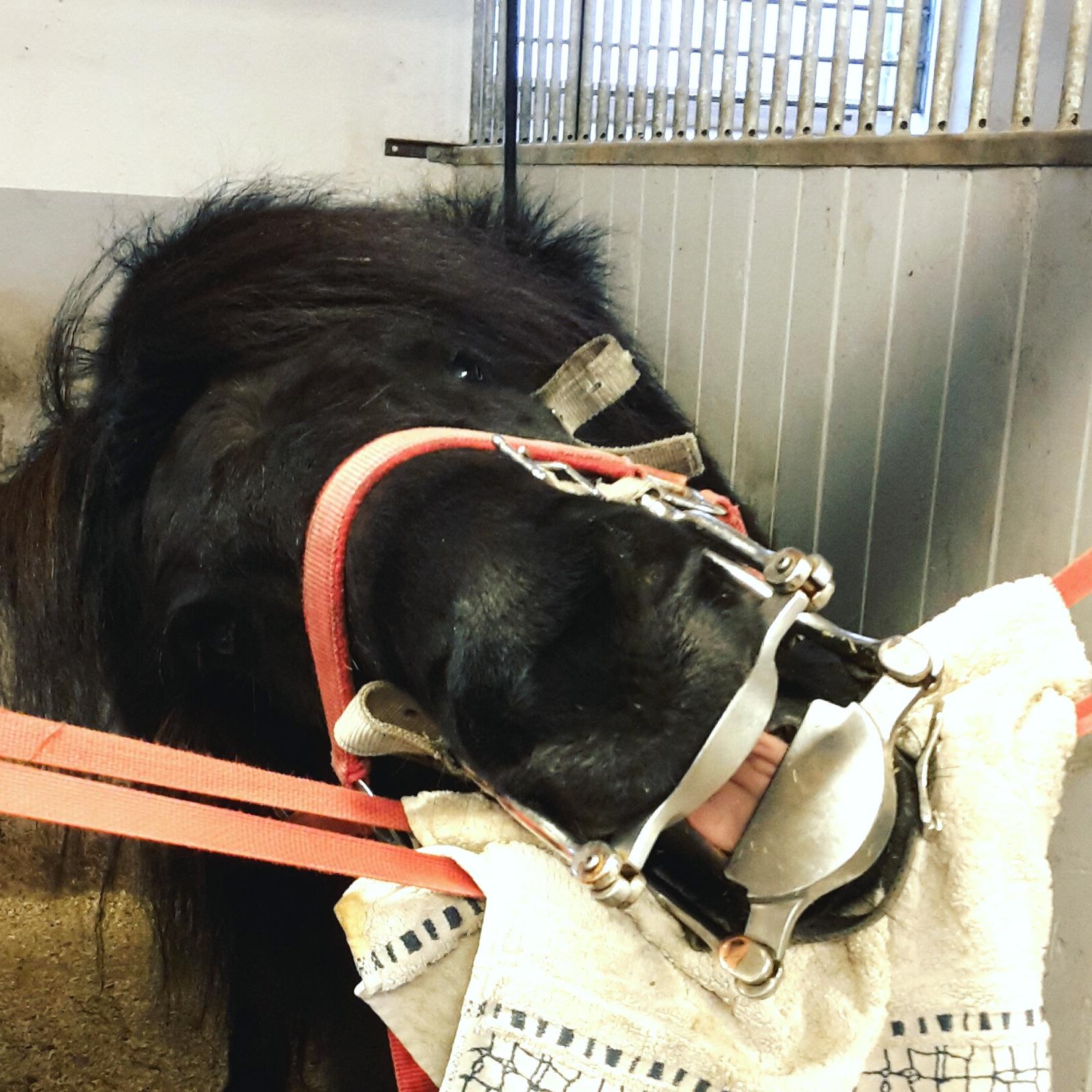 kolla tänderna på häst