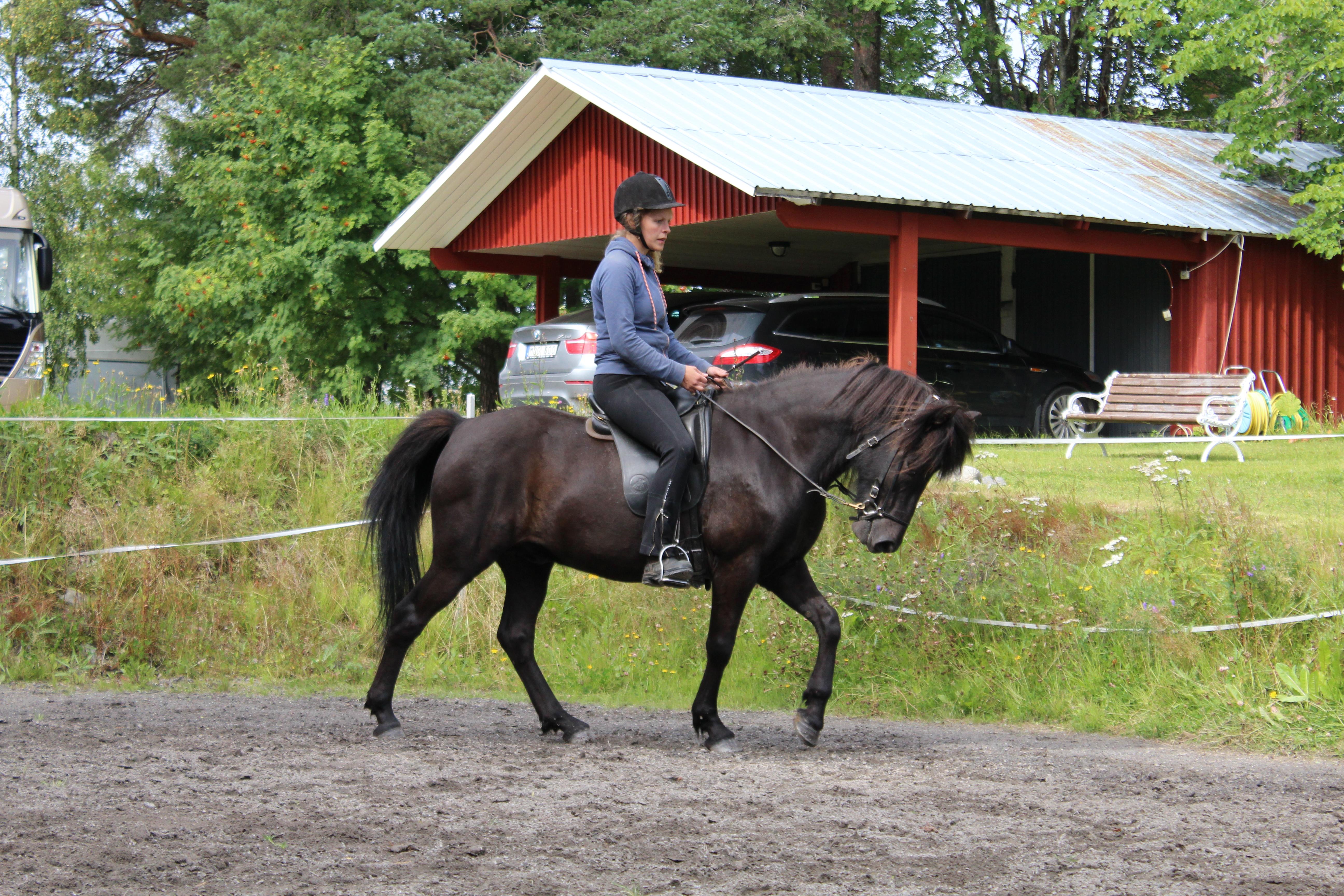 framåtbjudning islandshäst